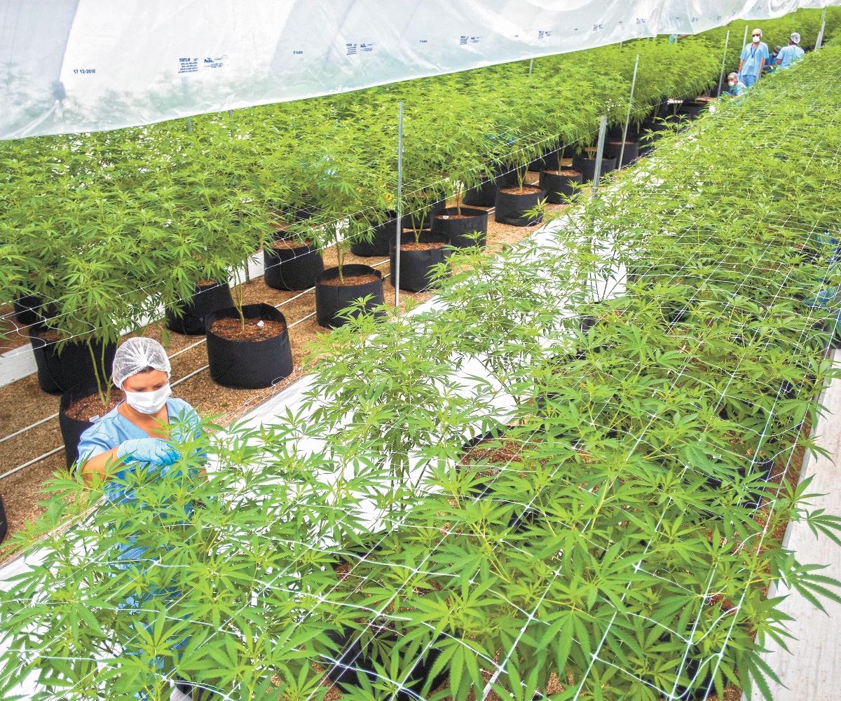 legalización de la marihuana